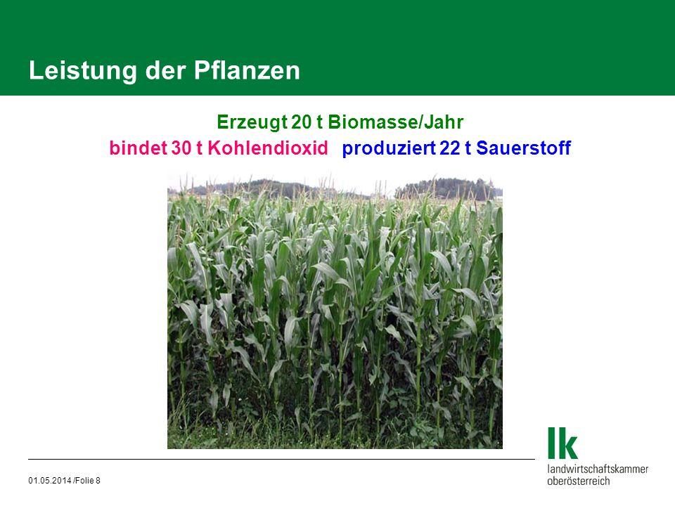 Leistung der Pflanzen Erzeugt 20 t Biomasse/Jahr