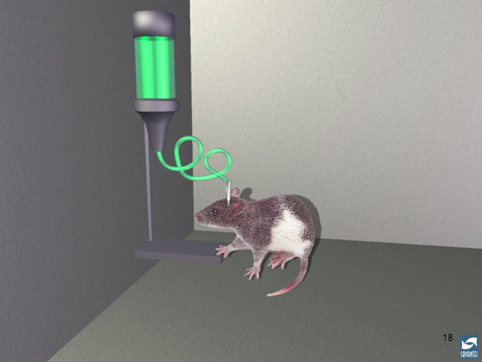 Slide 18: Rats self-administer heroin