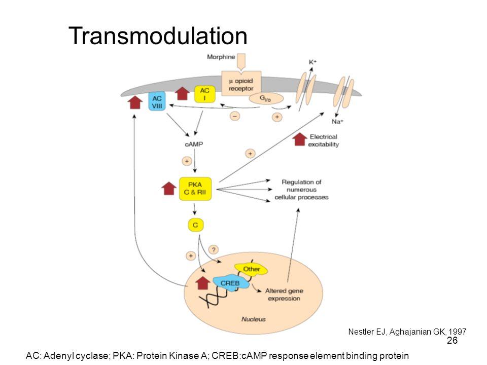 Transmodulation Nestler EJ, Aghajanian GK, 1997.