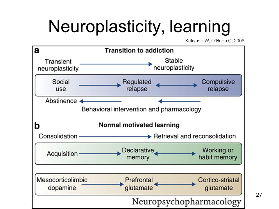 Neuroplasticity, learning