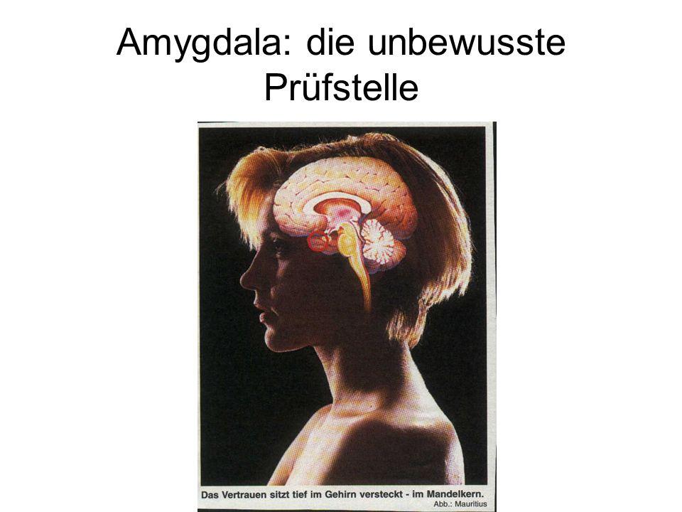 Amygdala: die unbewusste Prüfstelle