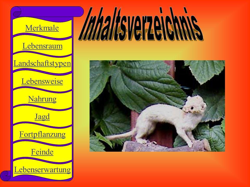 Inhaltsverzeichnis Merkmale Lebensraum Landschaftstypen Lebensweise