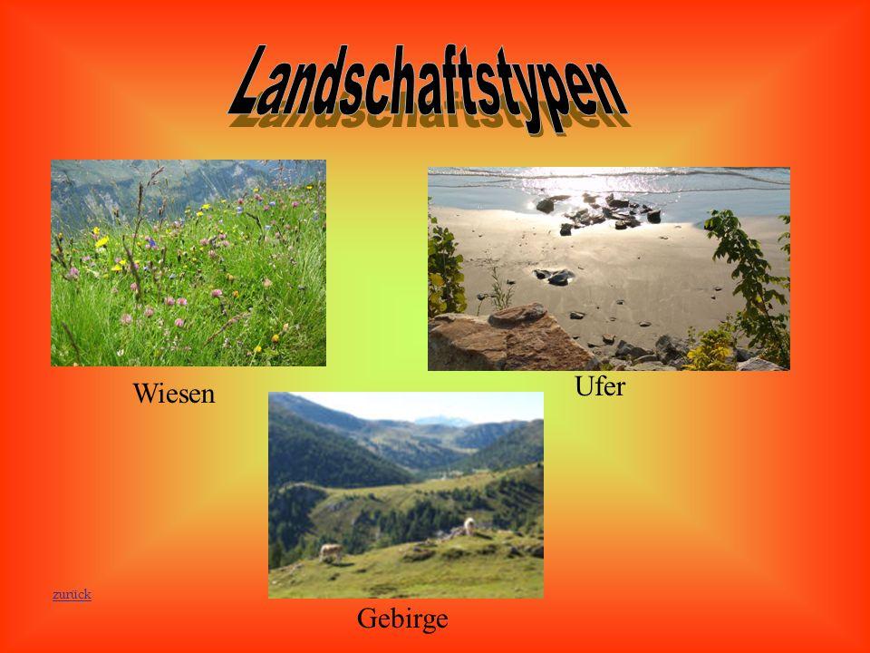 Landschaftstypen Wiesen Ufer Gebirge zurück