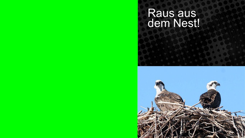 Raus aus dem Nest Raus aus dem Nest!