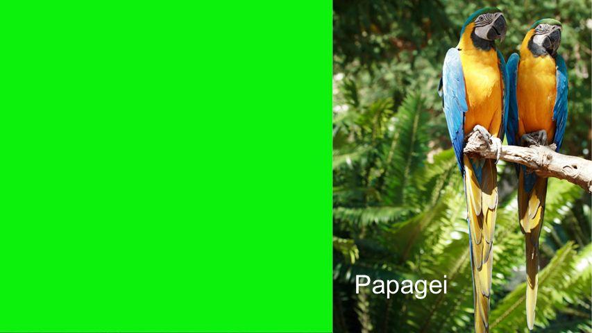 Seiteneinblender Papagei