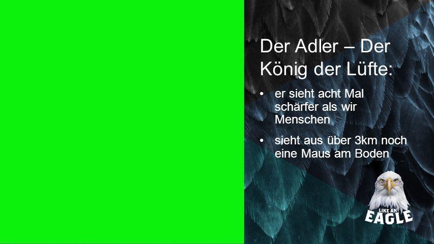 Der Adler – Der König der Lüfte: