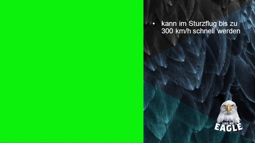 Seiteneinblender kann im Sturzflug bis zu 300 km/h schnell werden