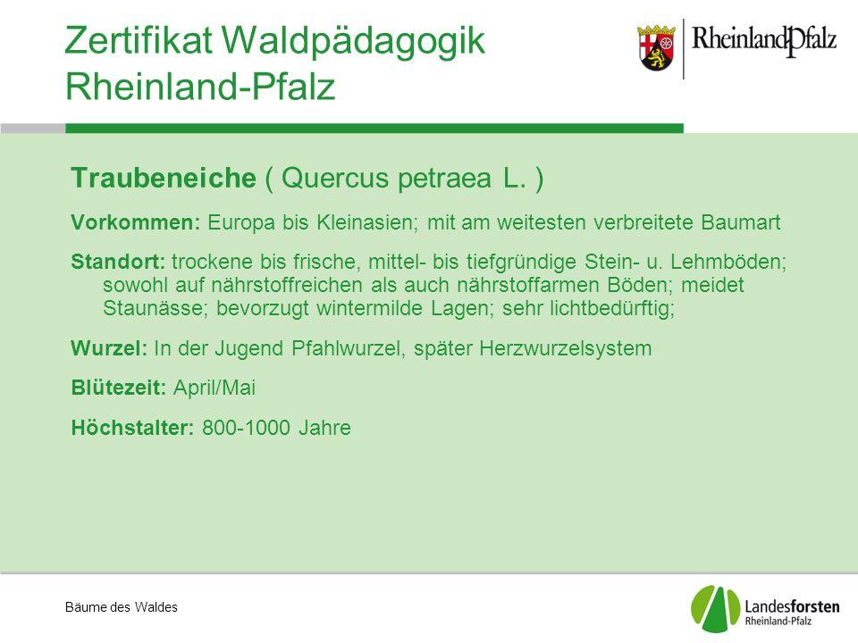 Zertifikat Waldpädagogik Rheinland-Pfalz