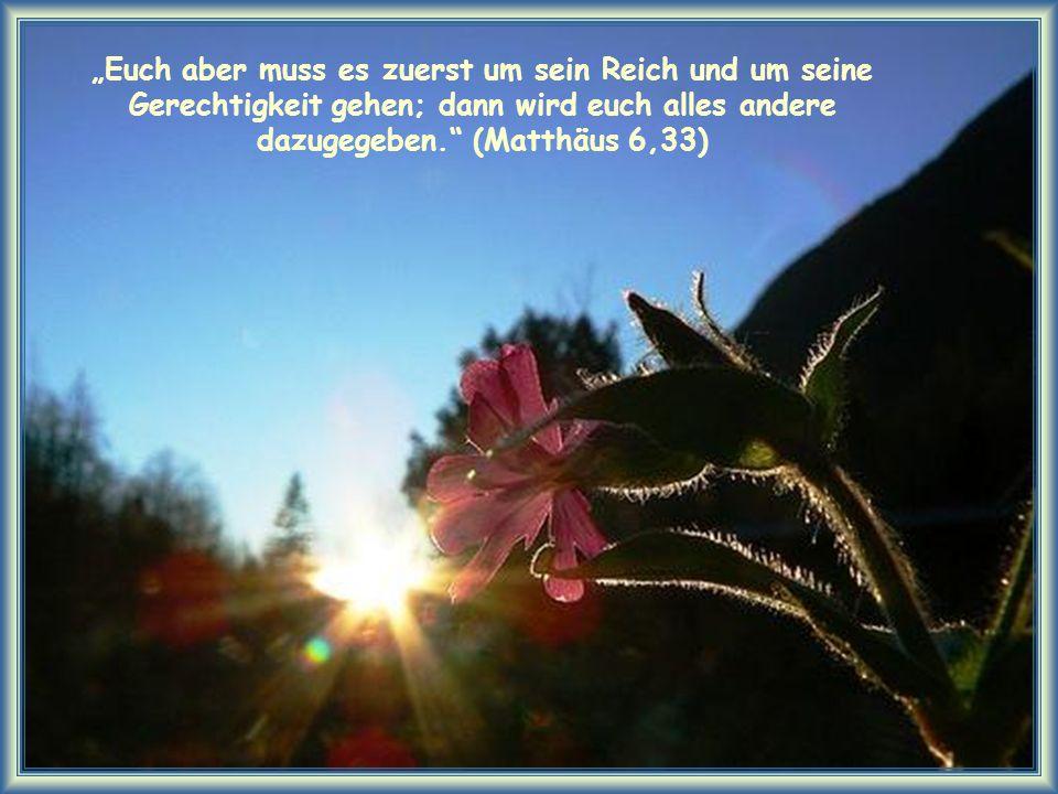 """""""Euch aber muss es zuerst um sein Reich und um seine Gerechtigkeit gehen; dann wird euch alles andere dazugegeben. (Matthäus 6,33)"""