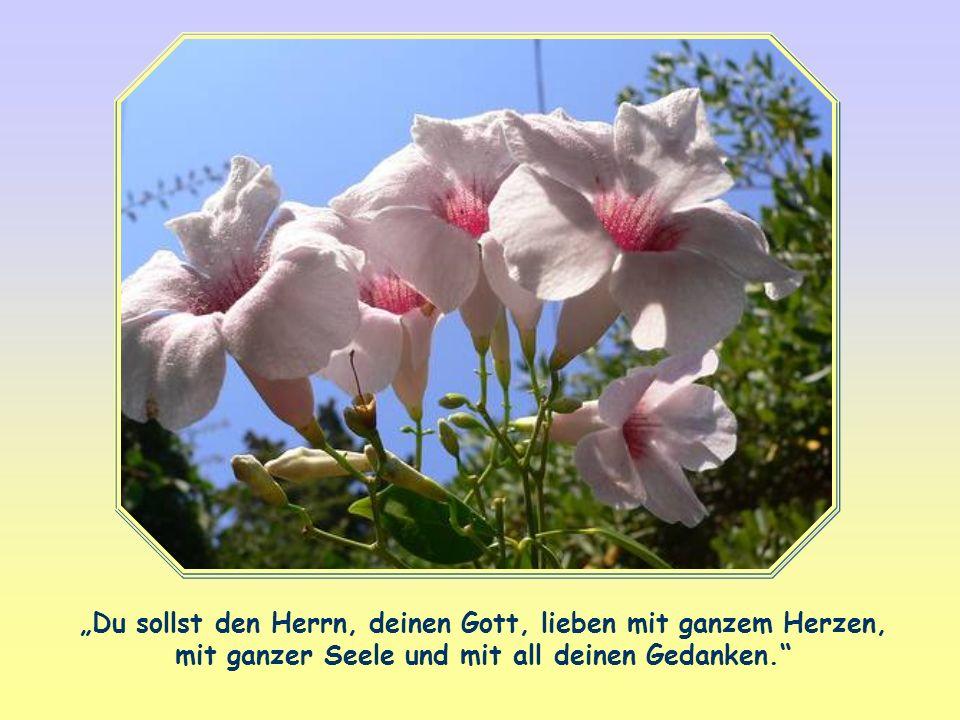 """""""Du sollst den Herrn, deinen Gott, lieben mit ganzem Herzen, mit ganzer Seele und mit all deinen Gedanken."""