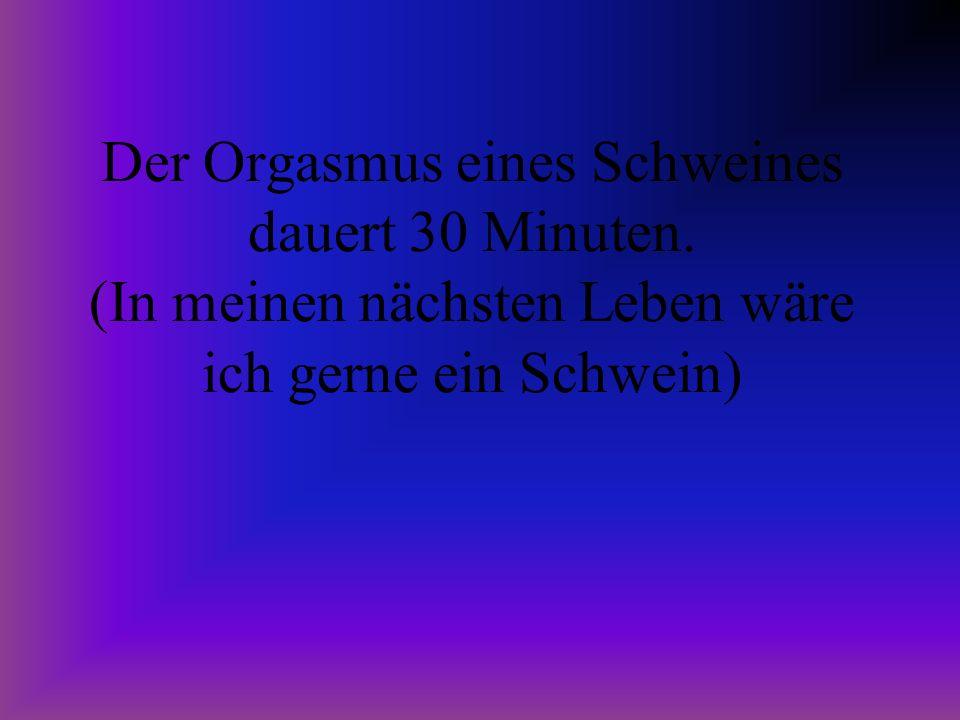 Der Orgasmus eines Schweines dauert 30 Minuten