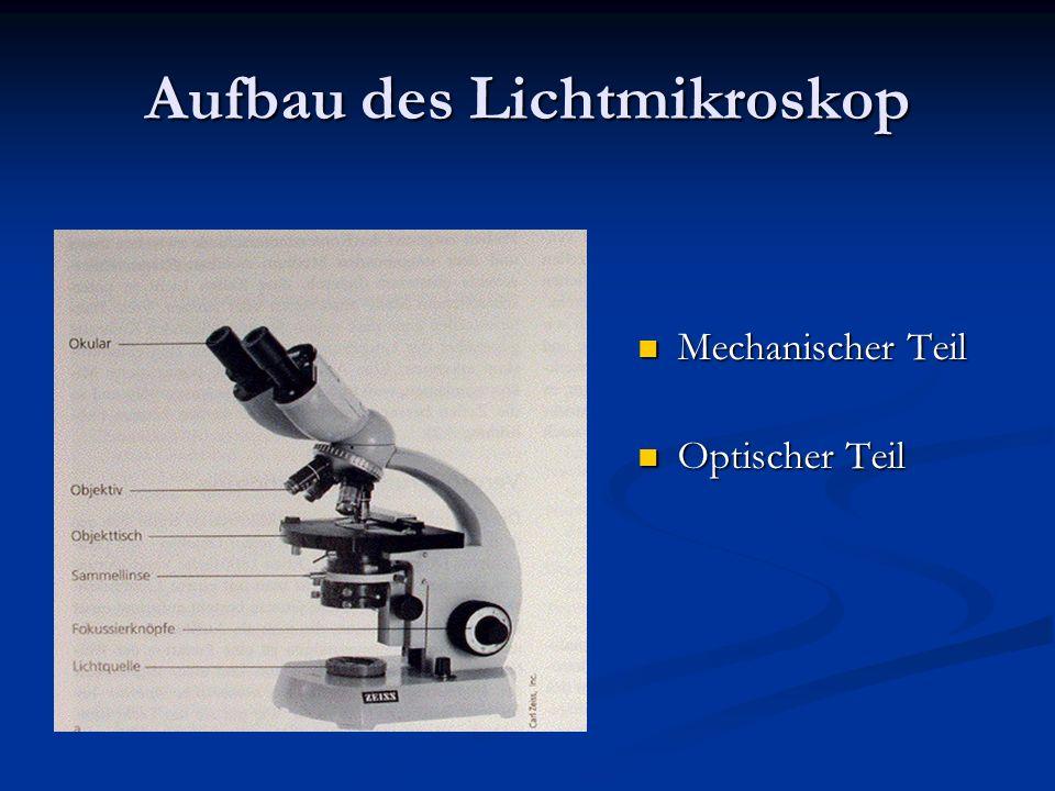 Aufbau des Lichtmikroskop