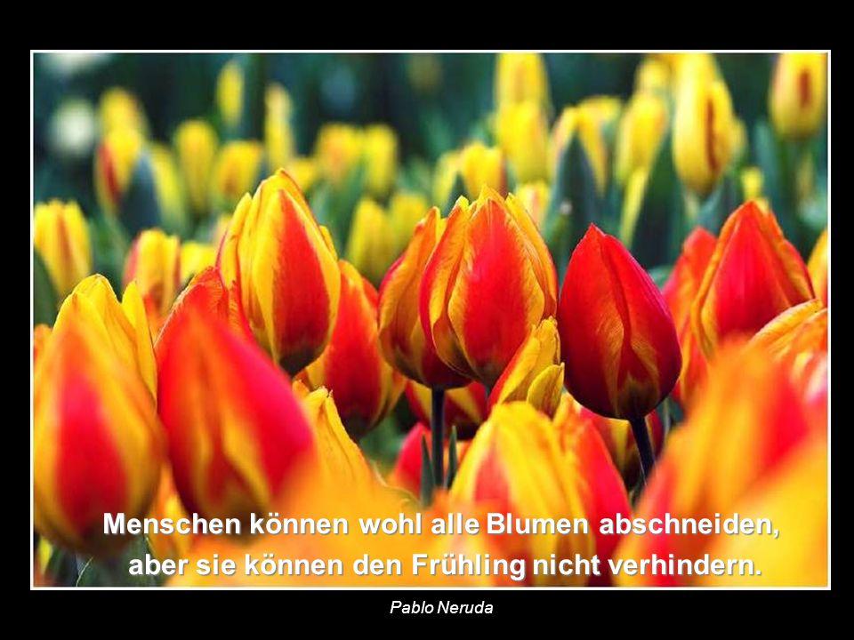 Menschen können wohl alle Blumen abschneiden,
