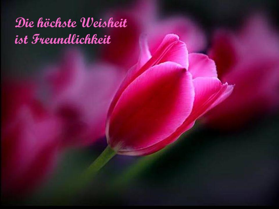 Die höchste Weisheit ist Freundlichkeit