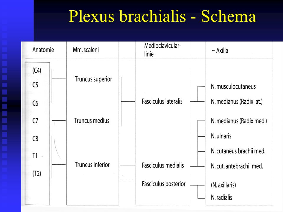 Plexus brachialis - Schema