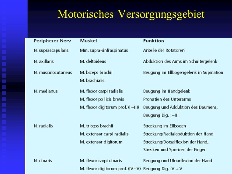 Motorisches Versorgungsgebiet