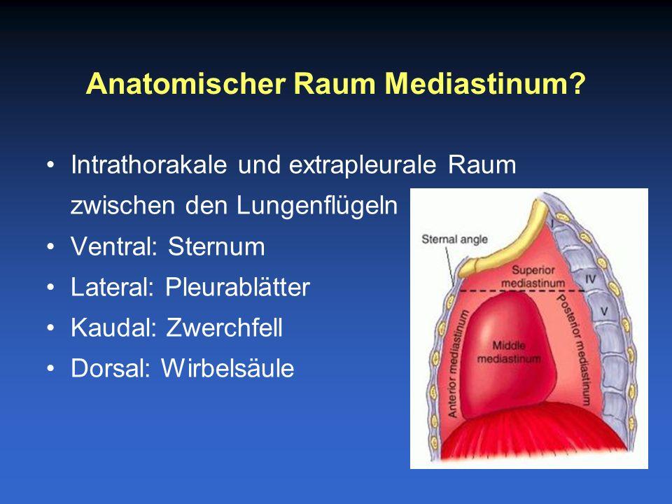 Anatomischer Raum Mediastinum