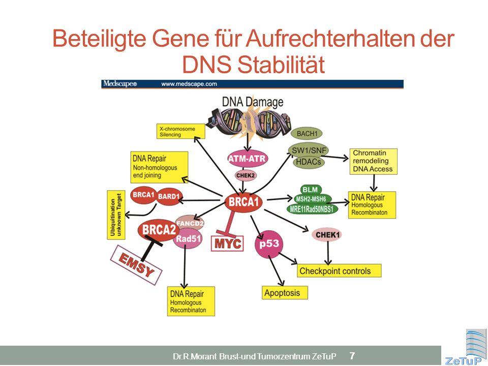 Beteiligte Gene für Aufrechterhalten der DNS Stabilität