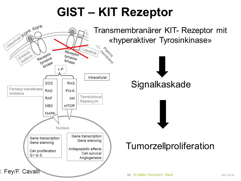 Transmembranärer KIT- Rezeptor mit «hyperaktiver Tyrosinkinase»