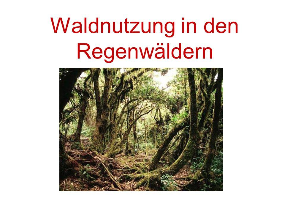Waldnutzung in den Regenwäldern