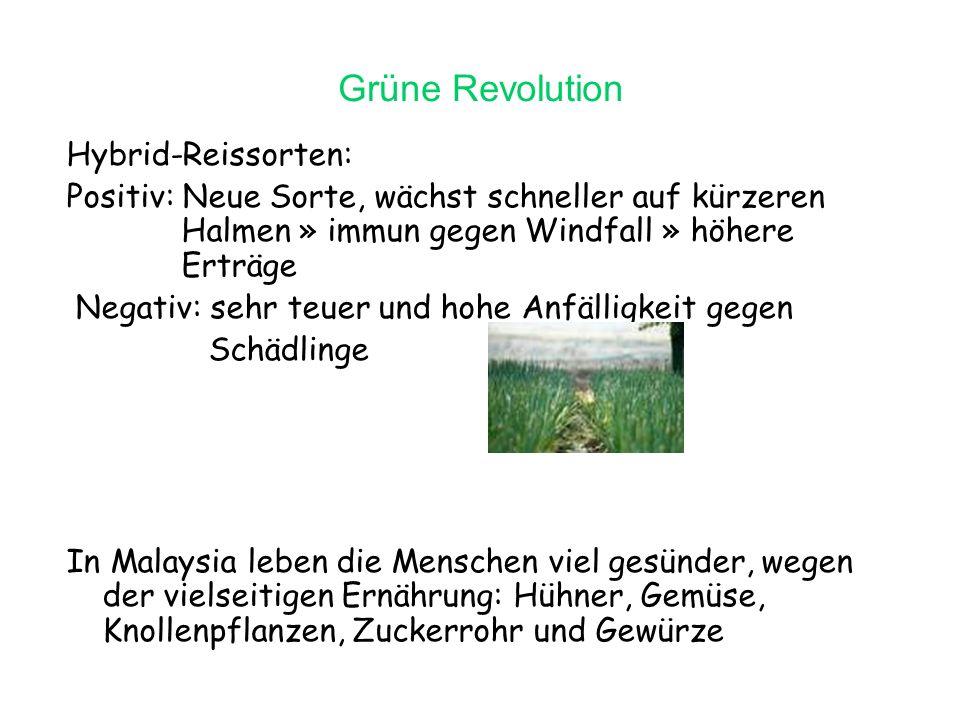 Grüne Revolution Hybrid-Reissorten: