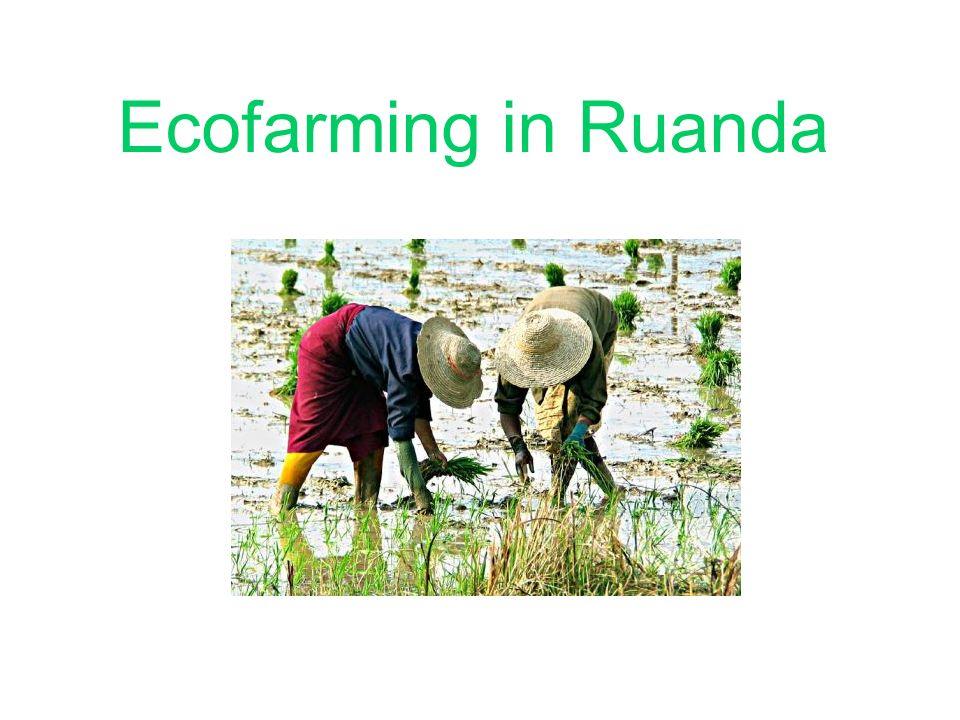 Ecofarming in Ruanda