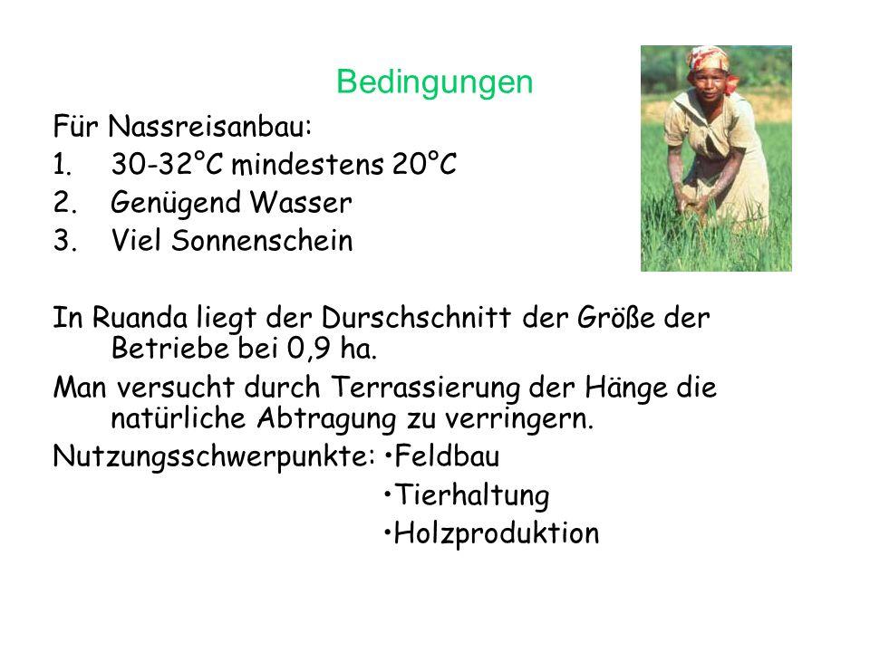 Bedingungen Für Nassreisanbau: 30-32°C mindestens 20°C Genügend Wasser