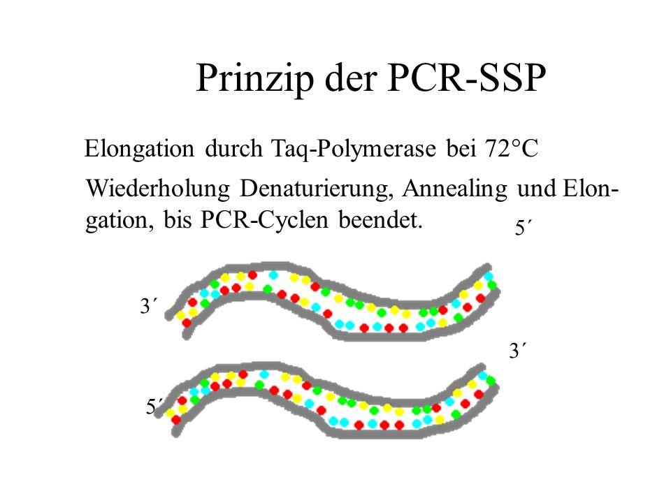Prinzip der PCR-SSP Elongation durch Taq-Polymerase bei 72°C
