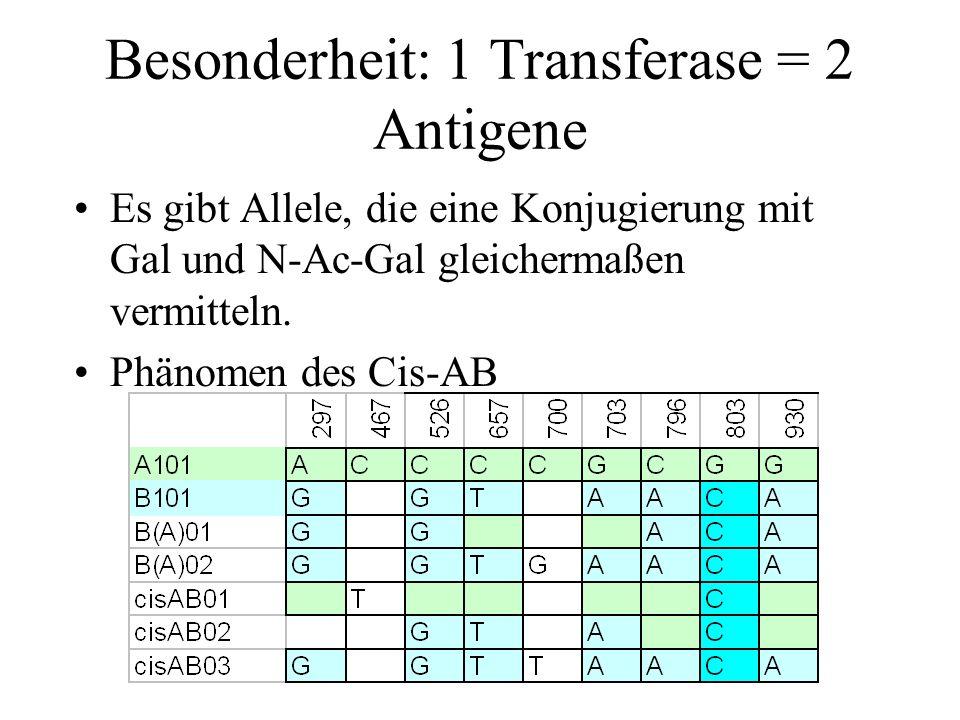 Besonderheit: 1 Transferase = 2 Antigene