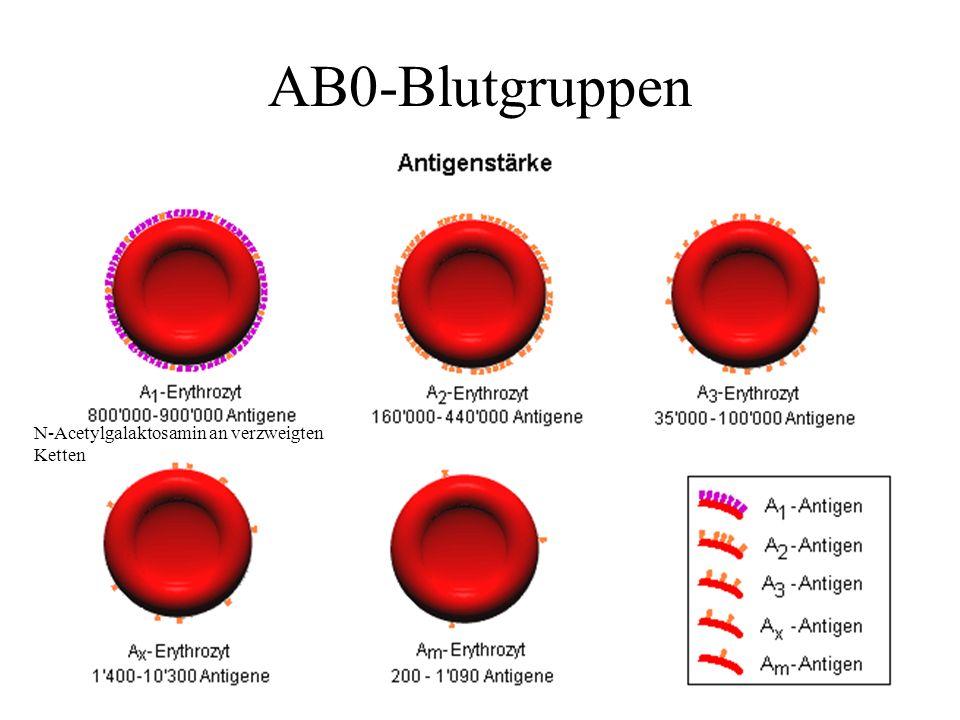 AB0-Blutgruppen N-Acetylgalaktosamin an verzweigten Ketten