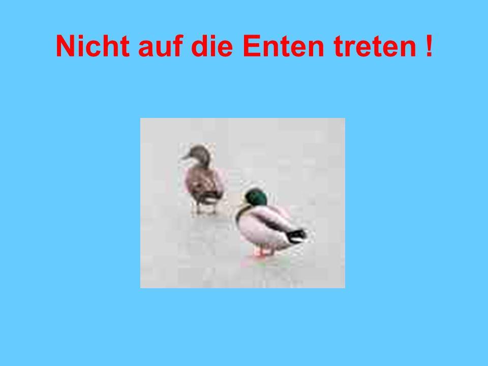 Nicht auf die Enten treten !