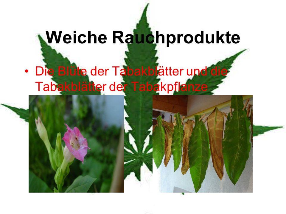 Weiche Rauchprodukte Die Blüte der Tabakblätter und die Tabakblätter der Tabakpflanze