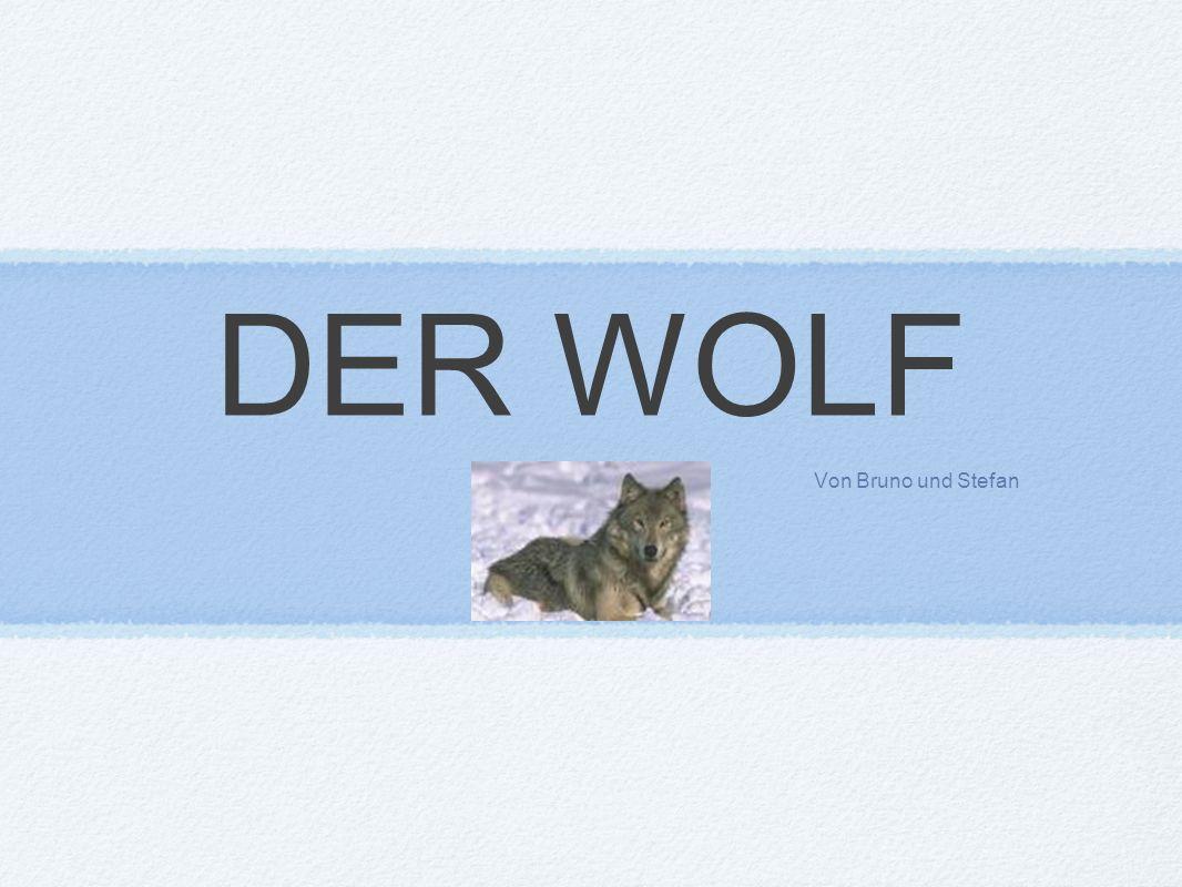 DER WOLF Von Bruno und Stefan