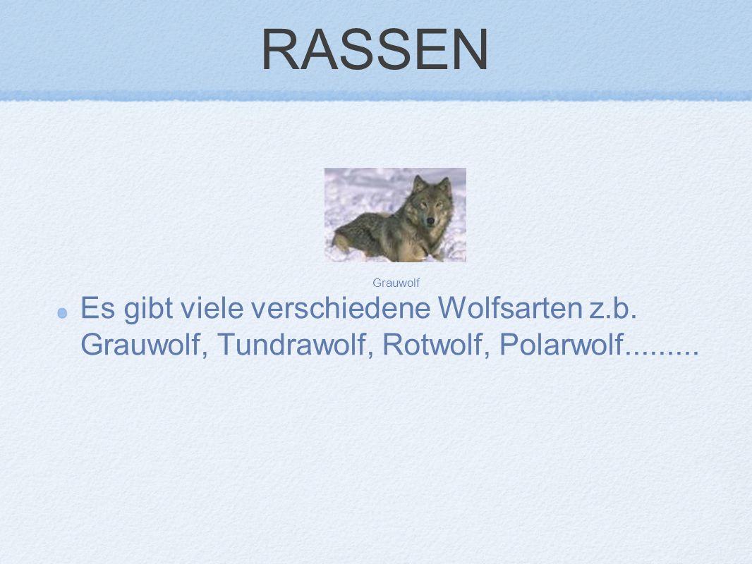 RASSEN Es gibt viele verschiedene Wolfsarten z.b. Grauwolf, Tundrawolf, Rotwolf, Polarwolf.........