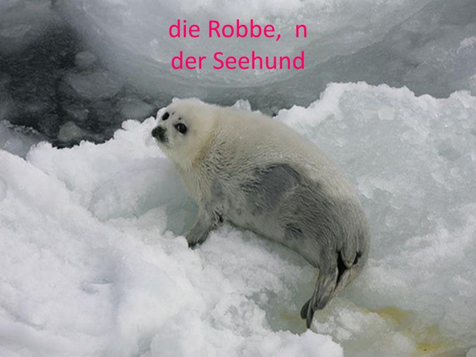 die Robbe, n der Seehund