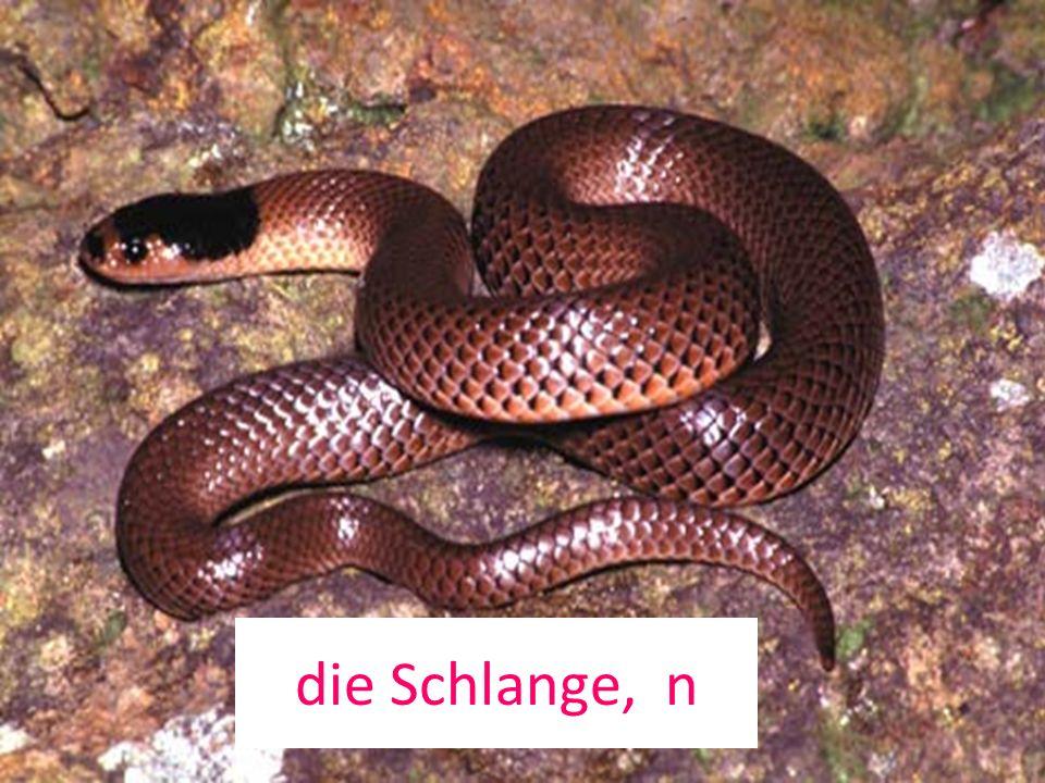 die Schlange, n