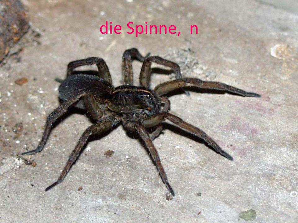 die Spinne, n