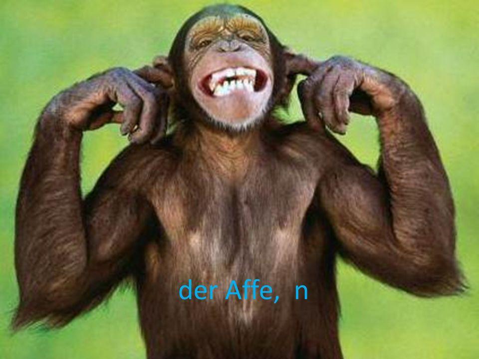 der Affe, n