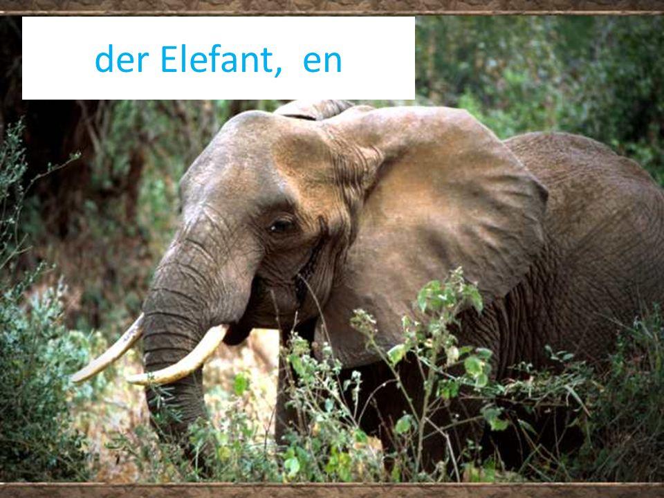 der Elefant, en