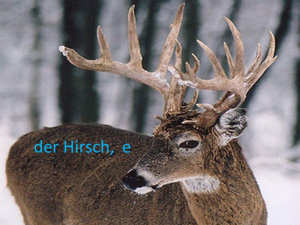 der Hirsch, e