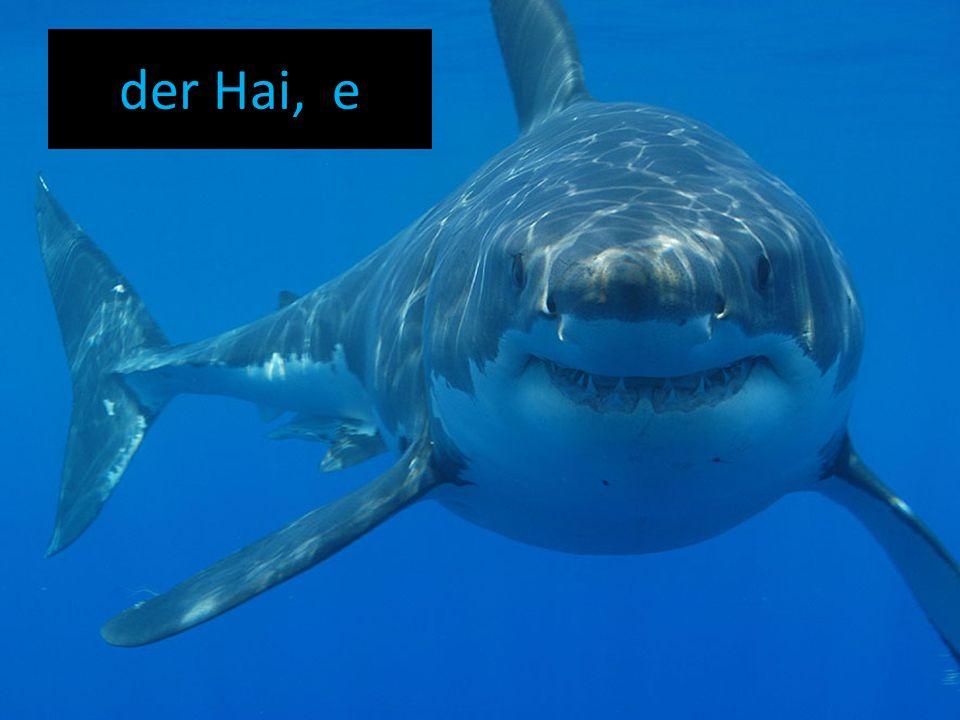 der Hai, e