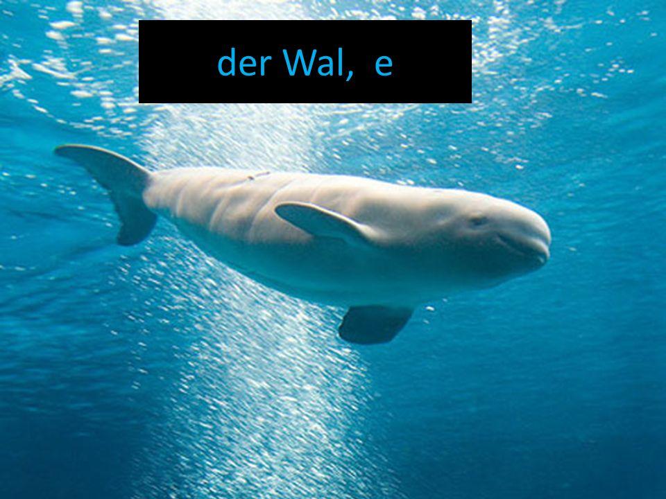 der Wal, e