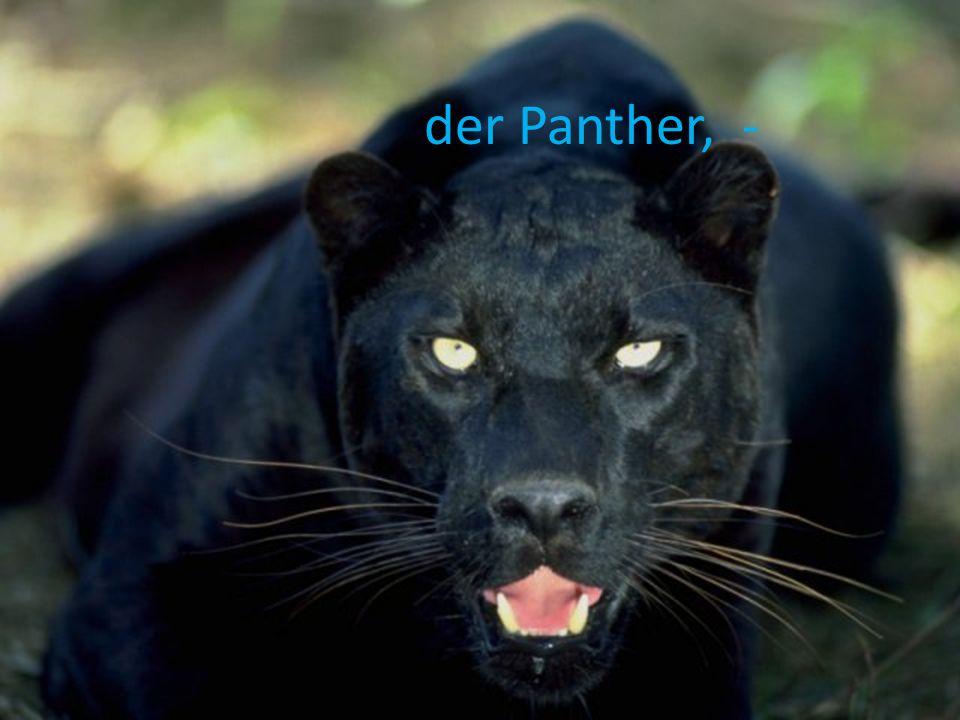der Panther, -