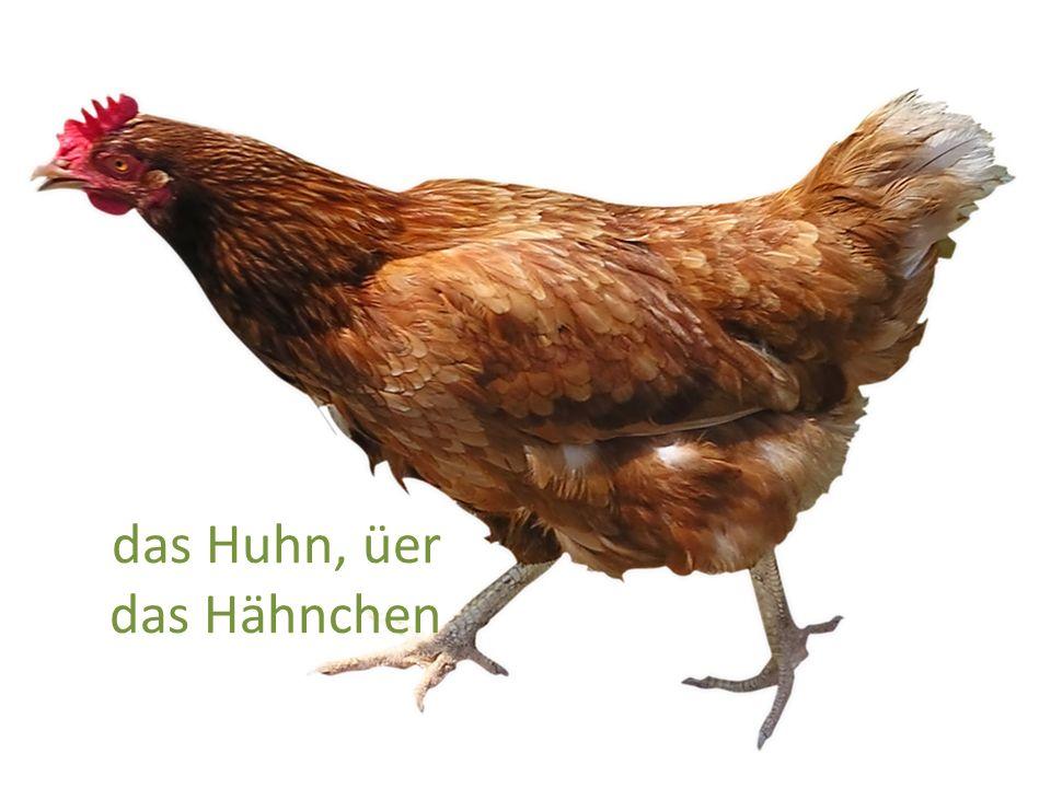 das Huhn, üer das Hähnchen