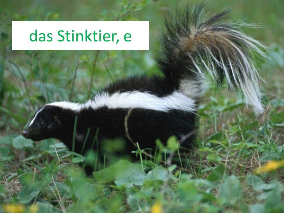 das Stinktier, e