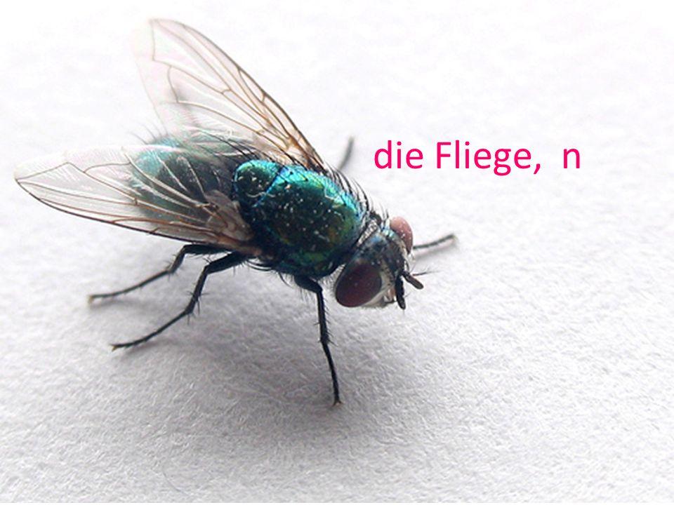 die Fliege, n