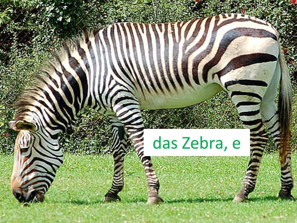 das Zebra, e