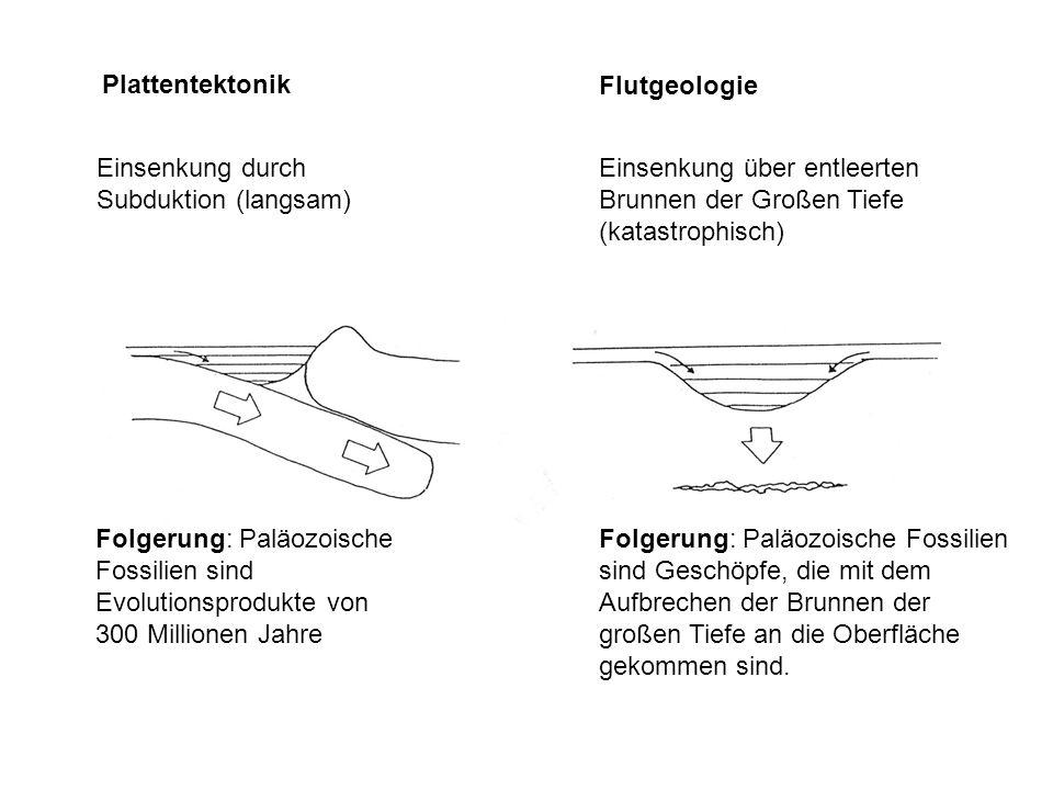 Plattentektonik Flutgeologie. Einsenkung durch Subduktion (langsam) Einsenkung über entleerten Brunnen der Großen Tiefe (katastrophisch)