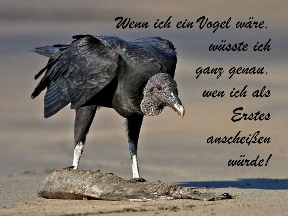 Wenn ich ein Vogel wäre, wüsste ich ganz genau, wen ich als Erstes anscheißen würde!