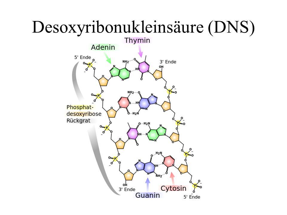 Desoxyribonukleinsäure (DNS)